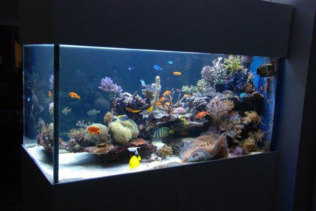 meeresaquarium ca 1000 liter arztvilla 8010 graz. Black Bedroom Furniture Sets. Home Design Ideas
