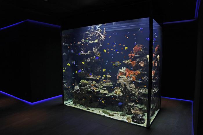 Marine Aquarium About 7 000 Litres Villa A 1190 Vienna